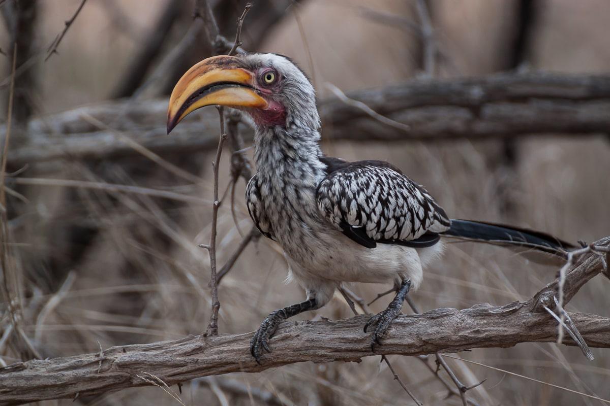 Südafrika, Kruger National Park: Die Vogelwelt des Kruger Nationalparks